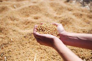 o que faz gestão do agronegócio?